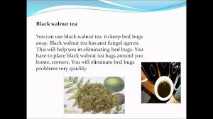 natural bed bug remedies natural home remedies for bed bugs youtube