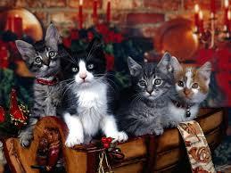 wallpaper christmas desktop christmas kittens desktop wallpaper
