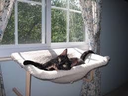 Window Sill Cat Bed Allegra U0027s World New Window Perch