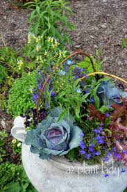 edible plants that do duty as ornamentals ramblings from