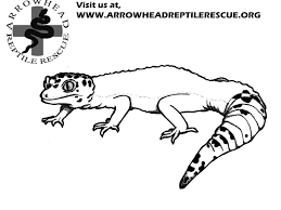 leopard print coloring pages leopard coloring pages