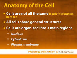 Anatomy And Physiology Cells And Tissues Physiology And Anatomy Essentials Cells U0026 Tissues