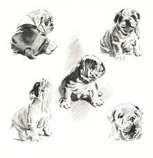english bulldog illustration