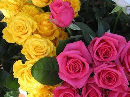 Meaning Of Pink Roses Flowers - yellow roses flowers nature background wallpapers on desktop 1920