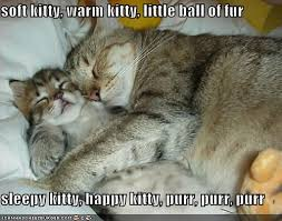 Sleepy Cat Meme - soft kitty warm kitty little ball of fur sleepy kitty happy
