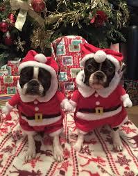 Christmas Dog Meme - 12 grumpy dogs dressed up for christmas rover com