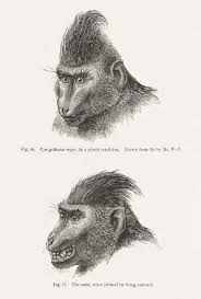 charles darwin britannica com