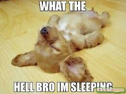 Im Sleepy Meme - what the hell bro im sleeping meme dods the chillest dog 58436