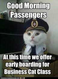 Business Cat Memes - animal memes captain kitteh those who complain about waiting have