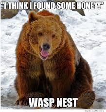 Meme Bear - bad luck bear fun time pinterest bears memes and fun time