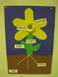science all about flowers lessons tes teach