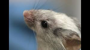 thousands of italian scientists protest strict limits on animal