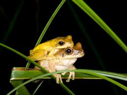 the color changing marvel of tree frogs looking for at the