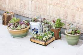 repotting succulents cassidy tuttle photography