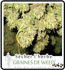 chambre de sechage cannabis le séchage du cannabis graines de
