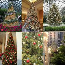 nyc style and a cannoli 10 best trees in new