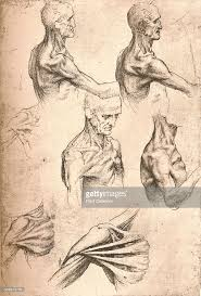 Leonardo Da Vinci Human Anatomy Drawings Anatomical Drawing C1472 C1519 1883 Artist Leonardo Da Vinci