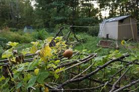 fruit tree garden layout winter planning for spring and summer vegetable gardens