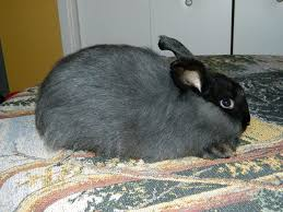 202 best bunny farm images on pinterest rabbit hutches bunny