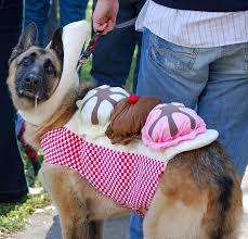 Sheep Dog Costume Halloween Funny Gsd Costumes Pics Good Dog Costumes Dog