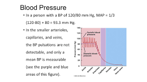 Blood Pressure Map Blood Pressure Normal Bp Varies By Age But Is Approximately 120