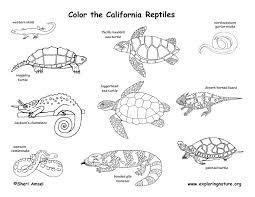 coloring pages of animals in their habitats california habitats mammals birds amphibians reptiles