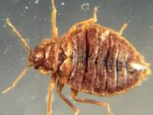 Bed Bugs In Ohio Bed Bug Exterminators Kill Bed Bugs Use Heat Kill Bed Bugs