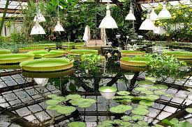 Botanical Gardens Images by The St Petersburg Botanical Garden Is One Of The Oldest In Russia