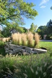 ornamental grass for privacy screen great garden plants