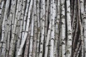 Birch Poles Home Decor