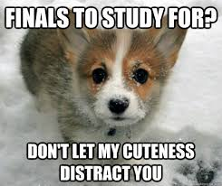 Cute Puppy Meme - finals to study for don t let my cuteness distract you