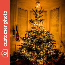 buy nordman fir christmas trees online send me a christmas tree