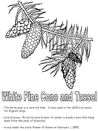 coloring page cone white pine cone and tassel coloring page