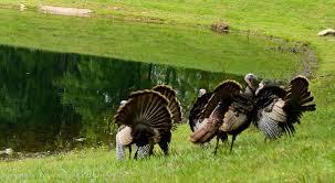North Carolina wildlife images North carolina wildlife kaye m debona photography jpg