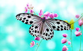 download butterfly wallpaper 4d0 verdewall