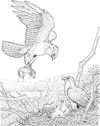 akita coloring page free akita online coloring eagle