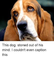 Stoned Dogs Meme - 25 best memes about dogs stoned dogs stoned memes