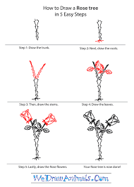 how to draw a rose tree