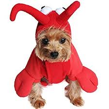 amazon com large lobster paws dog halloween costume pet supplies