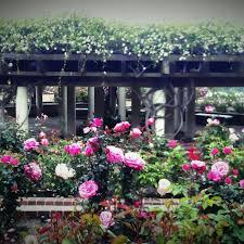 Balboa Park Botanical Gardens by The Rose Garden At Balboa Park San Diego California Beautiful