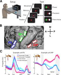 uniting functional network topology and oscillations in the fronto