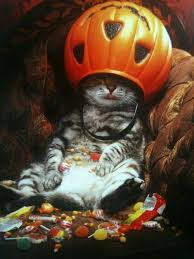 Halloween Candy Meme - he found the catnip then he found the halloween candy meme guy