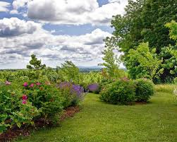 shady areas landscaping ideas houzz