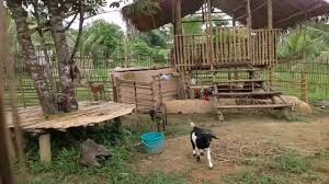 goat barn floor plans goat house design in the philippines youtube