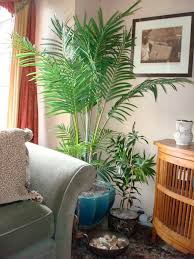 indoor plant arrangements artificial palms in living areas faux palms pinterest flower
