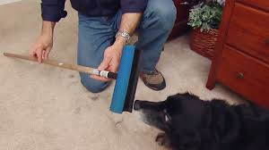 Mud Rugs For Dogs Easy Way To Remove Pet Hair From Carpet Today U0027s Homeowner
