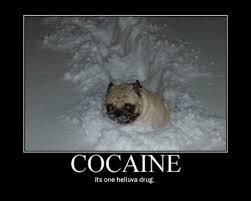 Bear Cocaine Meme - image 670898 cocaine bear know your meme