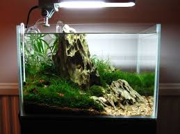 Aquascape Nj 159 Best Aquarium Aquascapes Images On Pinterest Aquarium Ideas