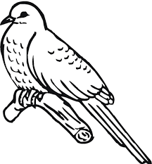 spring birds flowers coloring pages printable cuckoo bird