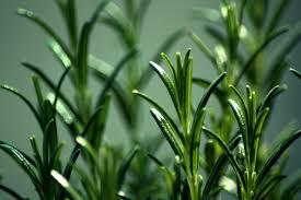 new zealand native plants and trees edible backyard u2014 growing food gardeners nz